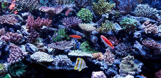 *Přehled reefových doplňků vody