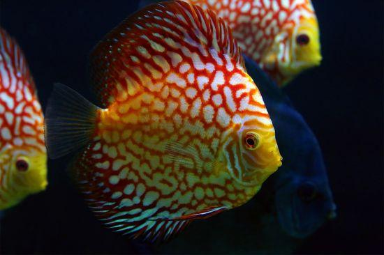 Dodělat - Sladkovodní akvárium: Jak sestavit