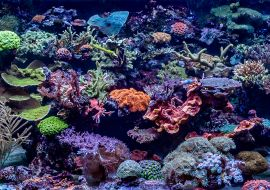 Harmonogram obsluhy mořského akvária