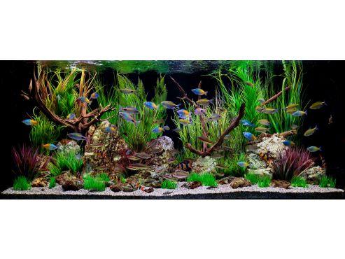 62-1aquarium-tropicalfish-fishtank.jpg