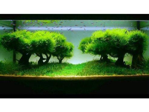 94304bf02848ca616c101aeda940794a-planted-aquarium-planted-freshwater-aquarium.jpg