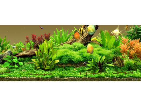 aqua-garden-266257-1248774162.jpeg