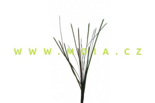 Rostlina Eel Grass – Zostera (5mm) 67cm