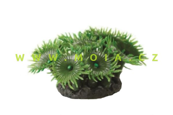 Button Polyp Colony Grn Green Palythoa sp. 3.5x3.5x8