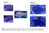 Léčebné kompletní přírodní krmivo pro ryby Masstick Fish Care, 56g