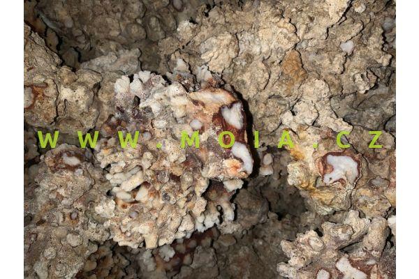 Kameny rifové – coral rock, cena/kg